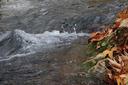Cours d'eau - La libre circulation des poissons - Projet d'arrêté du Gouvernement wallon