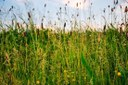 Vente d'herbe communale